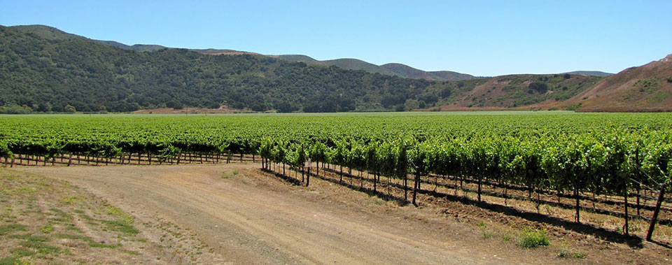 Explore Santa Barbara Wine Country.
